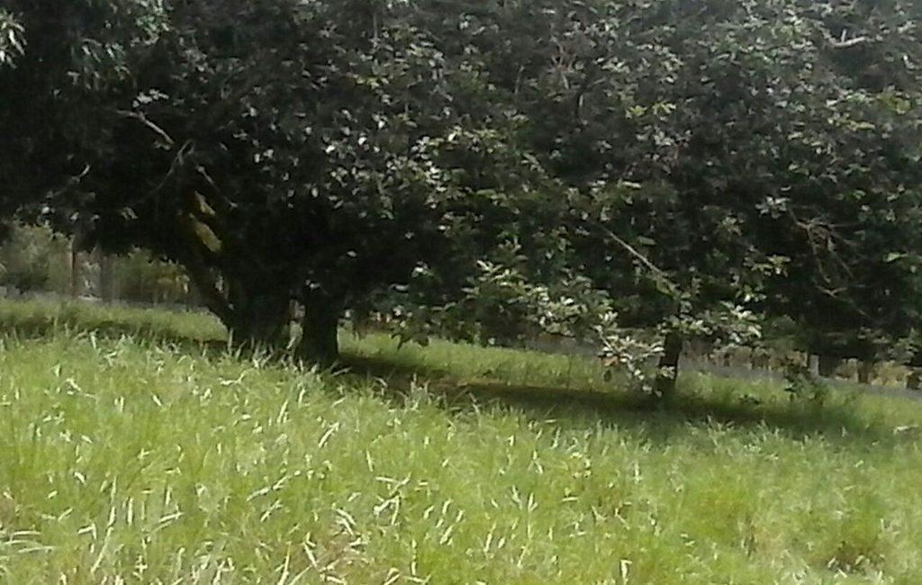 santiago-farm02
