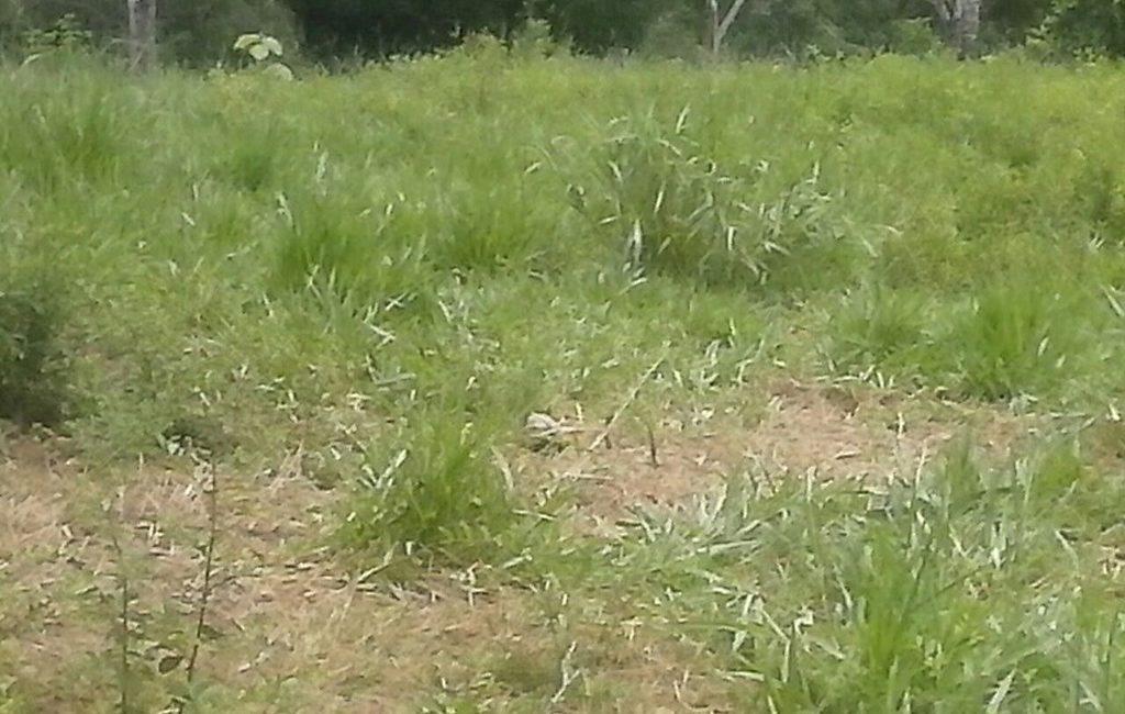 santiago-farm06