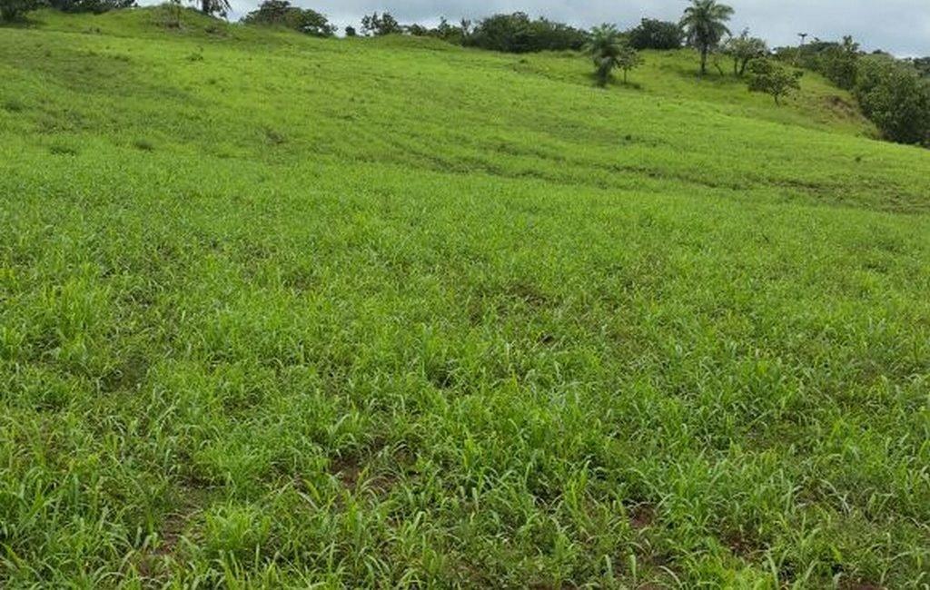 santiago-farm07