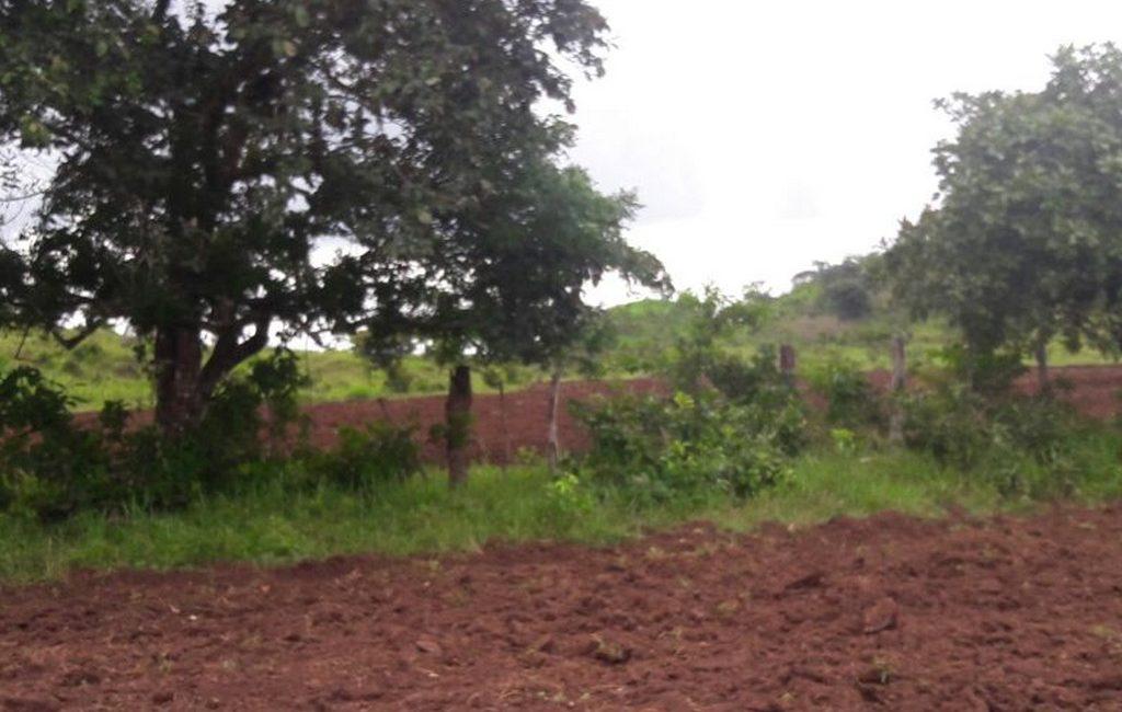 santiago-farm12